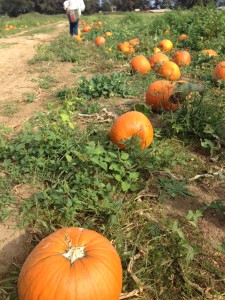Pumpkins海外レポート7-2